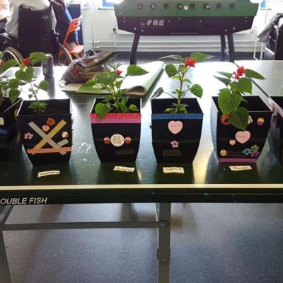 Young people enjoy potting plants to celebrate World Environment Day